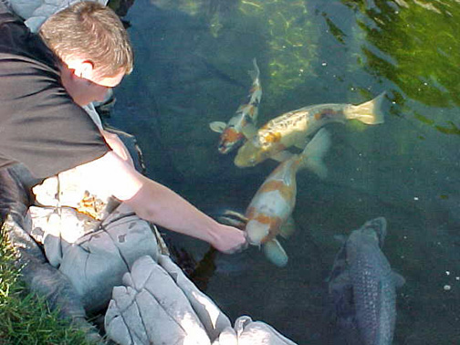 Photo gallery serenity ponds for Koi feeding